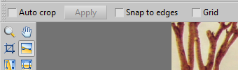 The Options toolbar.