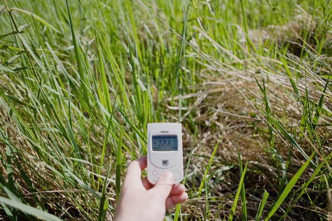 Grass absorbs ground radiation.